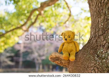 Teddy bear sitting in a tree - stock photo