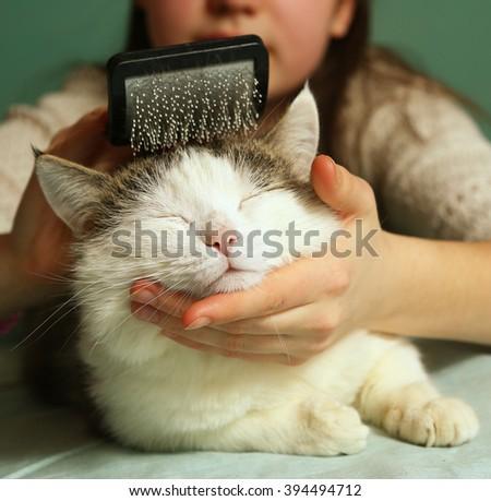 teen girl brushing siberian tom cat with brush close up portrait  - stock photo