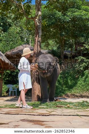Teen girl feeding elephant calf on Phuket island in Thailand - stock photo