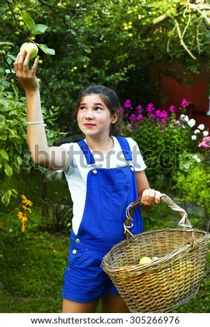 teen pretty girl collect apples from the tree - stock photo