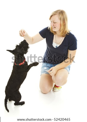 Teenage girl teaching her Scotty dog to do a trick.  Isolated on white. - stock photo