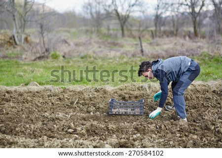 Teenager boy planting potatoes on a fresh plowed field - stock photo