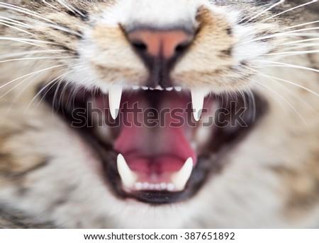 teeth evil cat as the backdrop. macro - stock photo