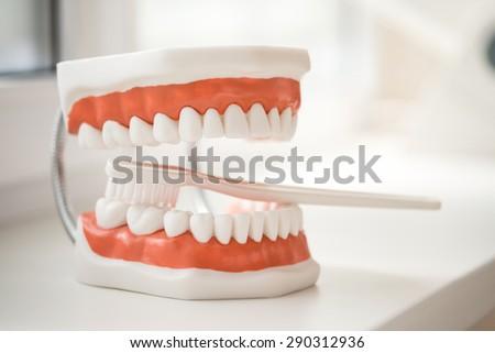 Teeth human model - stock photo