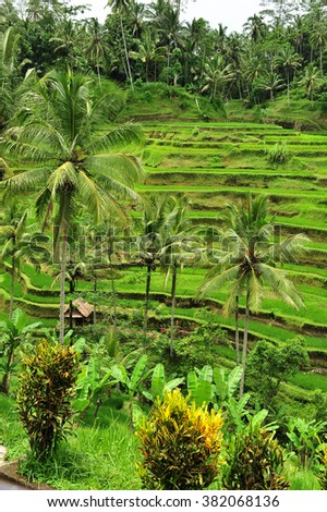 Tegalalang rice terrace fields, Ubud, Bali, Indonesia