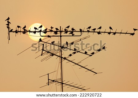 television antenna  with a bird on sunset - stock photo