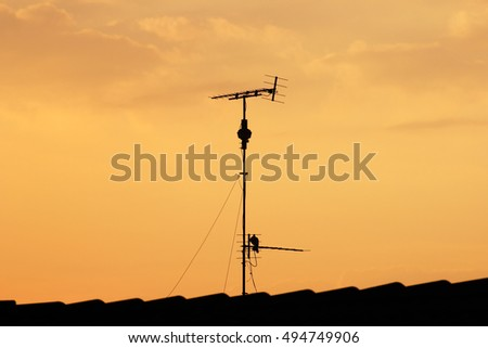 Television antenna with pigeon silhouette on roof top