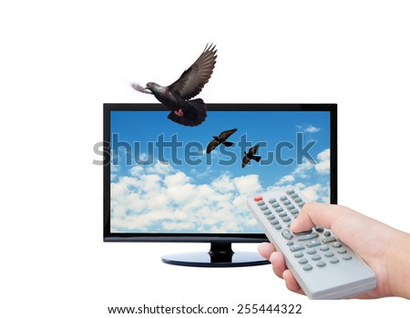 Television remote control & TV ,  Bird and Sky background - stock photo