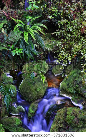 Temperate rain forest, South Island, New Zealand.Track - Mount Aspiring National Park - stock photo