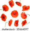 ten bright poppy flowers isolated on white - stock photo