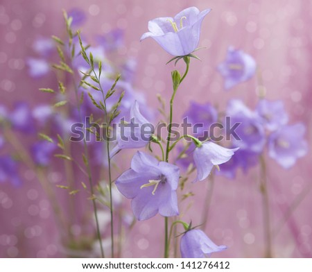 tender bluebells flowers grow in the grass - stock photo