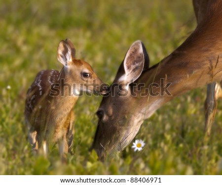 Tender Moment - stock photo