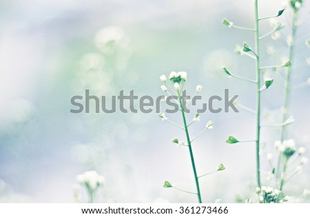 Tender nature abstract background, blurred, toned. Soft focus, Edited.  - stock photo
