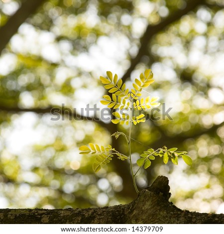 Tender Young Branch Growing from Stump on Branch - stock photo