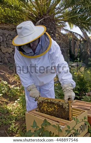 TENERIFE, CANARY ISLANDS - MARCH 20, 2010: Beekeeper moving a beehive panels in the north of Tenerife, Canary islands