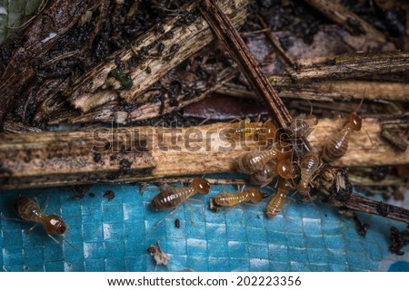 termite bugs crowd, macro shot. - stock photo