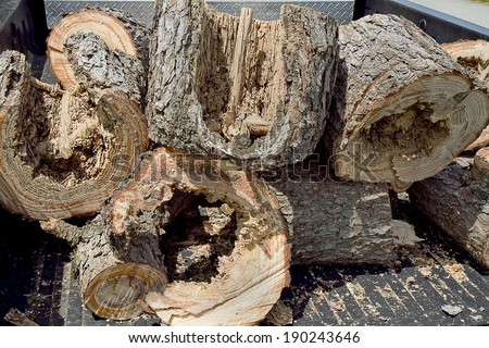 Termite infested tree parts from a pine tree cut up and piled in back of pick-up truck to be removed.   - stock photo