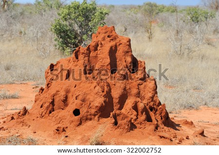 Termite mound in savanna in National park of Kenya - stock photo