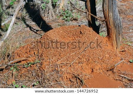 termite mound in the Australian bush - stock photo