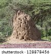 Termite mound in the Lake Manyara National Park - Tanzania, East Africa - stock photo