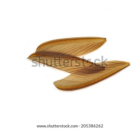 Termite wings. isolated on white background. - stock photo