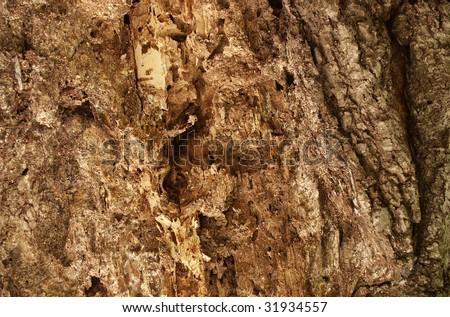 Termites damaged tree - stock photo