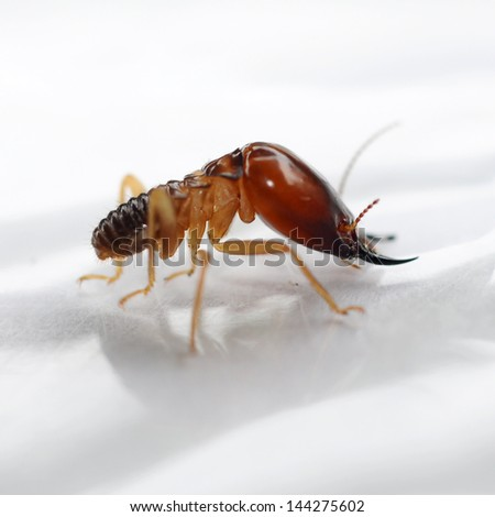 Termites eating the house - stock photo