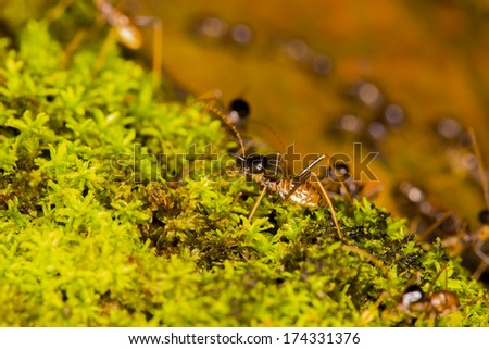 termites on green moss with nature background - stock photo