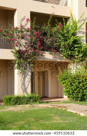Terrace in the hotel rooms, decorated bush Bougainvillea.