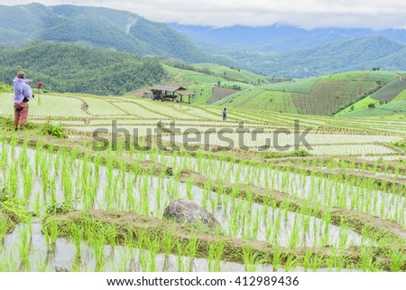 Terrace Rice Field in North Thailand. Pa Bong Piang rice paddy field in Chiang mai Thailand. - stock photo