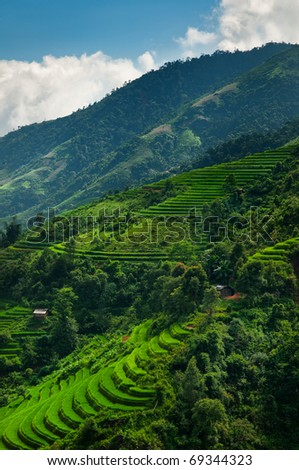 Terrace rice fields in the valley of Sapa, Vietnam - stock photo