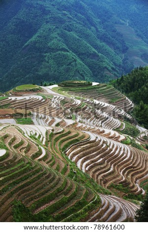 Terraced field in Guilin, China