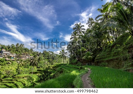 Terraced fields at Ubud, Bali, Indonesia