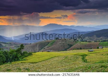 Terraced Paddy Field in Mae-Jam Village , Chaingmai Province , Thailand - stock photo