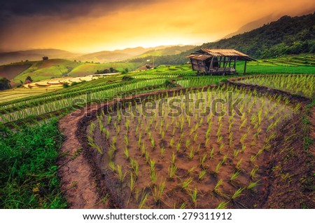 Terraced Paddy Field in Mae-Jam Village , Chaingmai Province , Thailand - stock photo