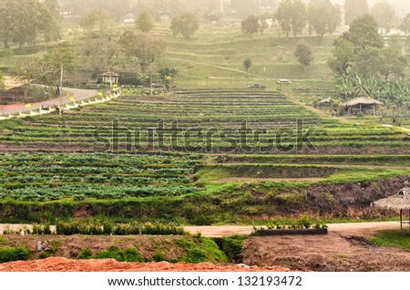 Terraced plant farm at chiang mai , thailand