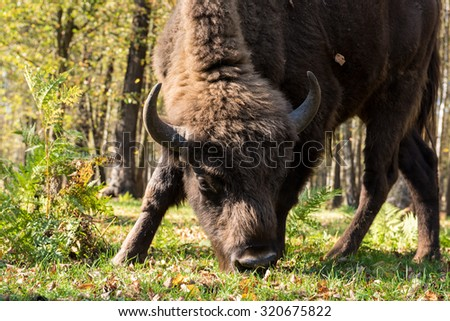 Terraced-Prioksky Reserve