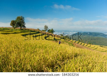 Terraced rice field at Mae Cham, Chiangmai Province, Northern Thailand - stock photo