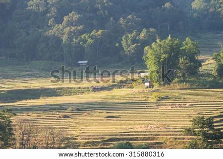 Terraced Rice Field in Chiangmai, Thailand - stock photo