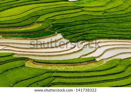 Terraced rice field in water season in Mu Cang Chai, Yen Bai Province, Vietnam - stock photo
