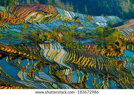 Terraced rice field in water season in YuanYang, China - stock photo