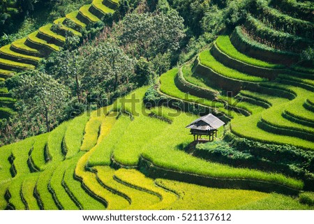 Terraced rice field landscape near Sapa in Vietnam.