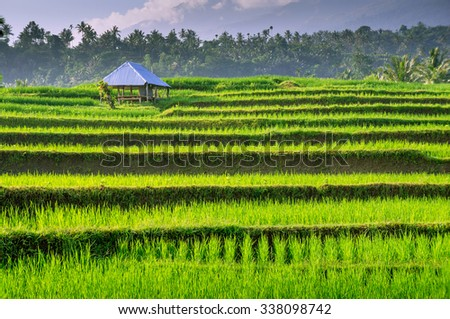 terraced rice fields around Senaru, Lombok, Indonesia, Asia - stock photo