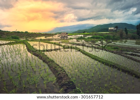 Terraced rice rield in Chiangmai, Thailand with cross process - stock photo