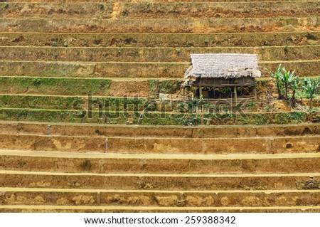 Terraces rice field - stock photo