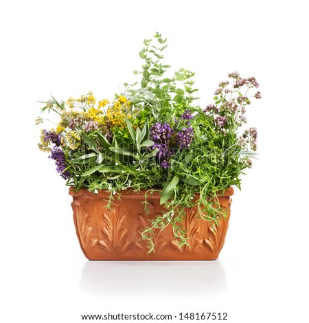 Terracotta flower pot with blooming herbs on white background - stock photo