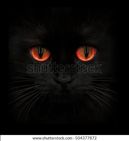 Terrible muzzle of a black cat with red eyes closeup