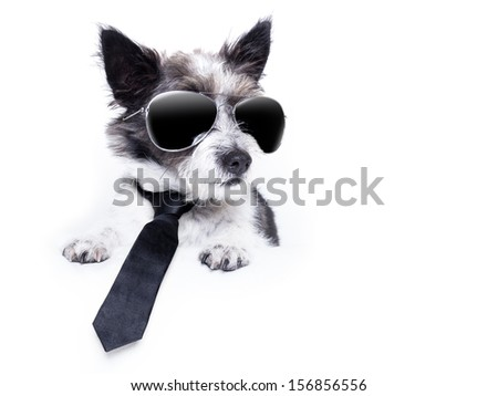 Terrier dog looking to the side banner - stock photo