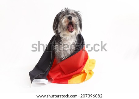 Terrier dog with German flag shout in front of a white background - stock photo