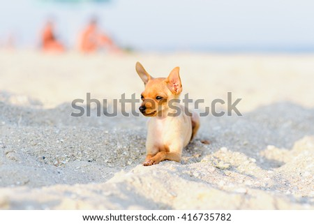terrier resting on the sea